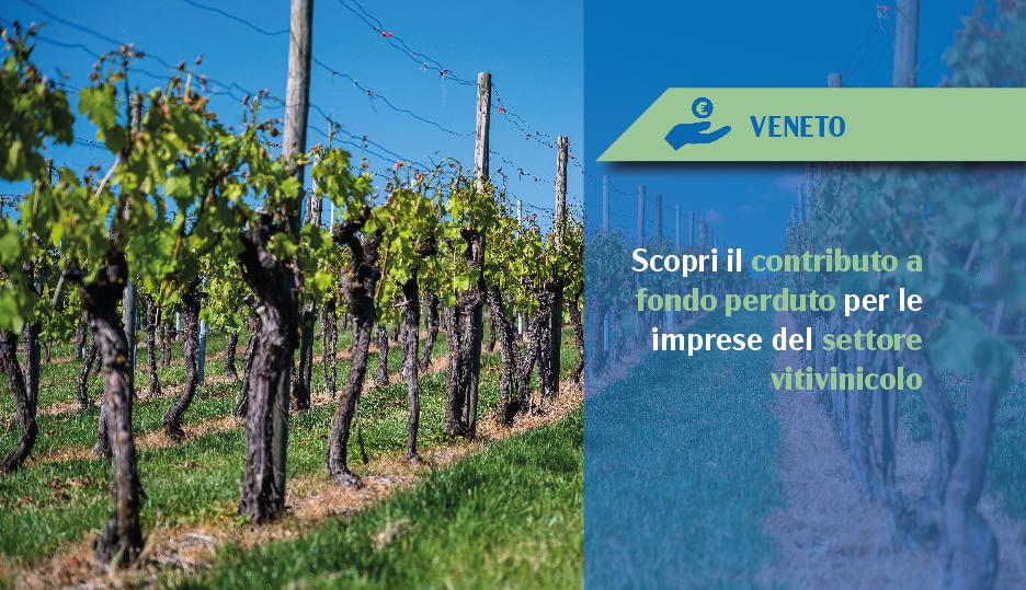 contributo promozione vino paesi terzi